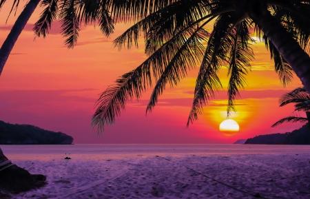 Photo pour Silhouetted of coconut tree during sunrise - image libre de droit
