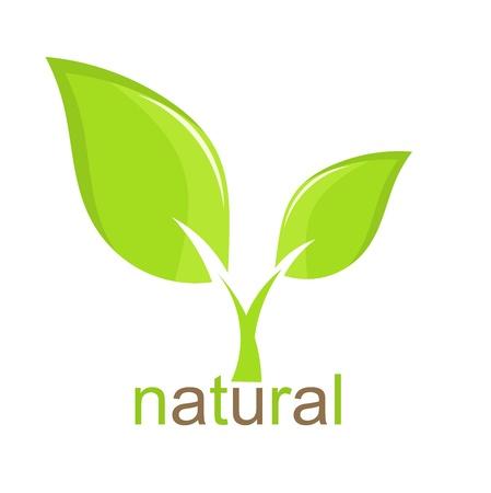 Green leaf natural icon. Vector illustration