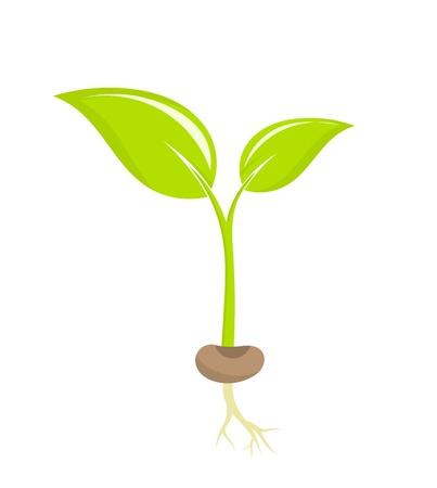 Illustration pour Little plant seedling illustration - image libre de droit