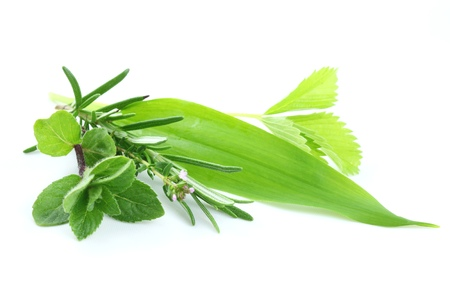 Photo for Fresh green herbs on white background - Royalty Free Image