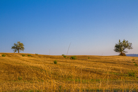 Photo for Tuscan countryside landscape with wheat and trees - Royalty Free Image