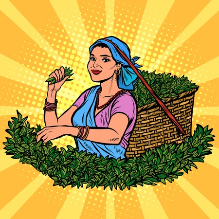 Illustration for Indian or Sri Lanka tea picker. Traditional harvest. woman in national dress. Pop art retro vector illustration kitsch vintage - Royalty Free Image