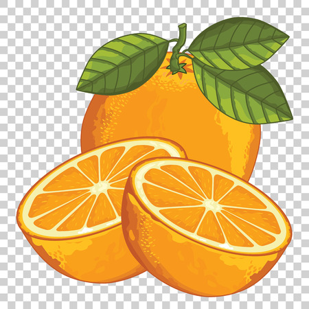 Illustration pour Orange Isolated, Vector. For design packing juice, yogurt and others. - image libre de droit