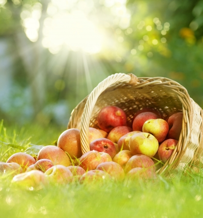 Photo for Healthy Organic Apples in the Basket - Royalty Free Image
