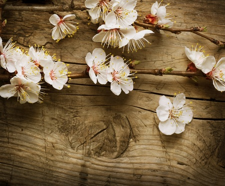 Spring Blossom over wooden background