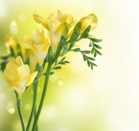 Photo for Freesia Flowers border design - Royalty Free Image