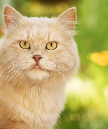 Photo pour Ginger cat  - image libre de droit