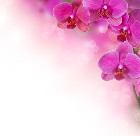 Photo for Orchid Flower border design - Royalty Free Image