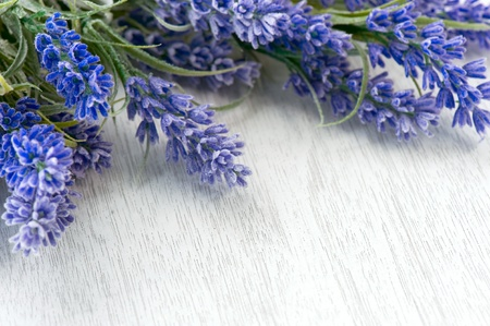 Lavender flowers over white