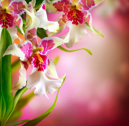 Photo for Orchid Flowers Design - Royalty Free Image