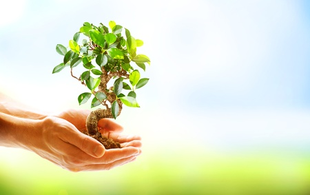 Photo pour Human Hands Holding Green Plant Over Nature Background  - image libre de droit