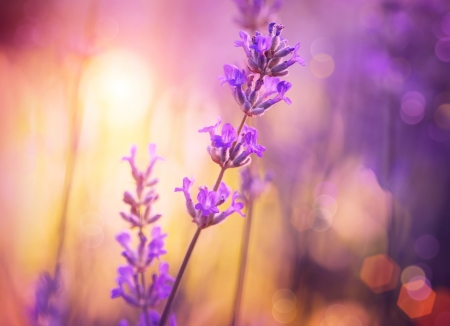 Foto de Flowers  Floral Abstract Purple Design  Soft Focus - Imagen libre de derechos