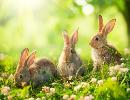 Photo for Rabbits  Art Design of Cute Little Easter Bunnies in the Meadow  - Royalty Free Image