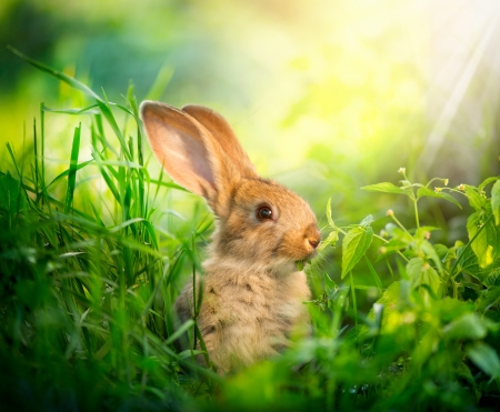 Foto de Rabbit  Art Design of Cute Little Easter Bunny in the Meadow - Imagen libre de derechos