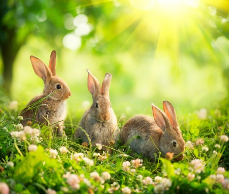 Rabbits Art Design of Cute Little Easter Bunnies in the Meadow