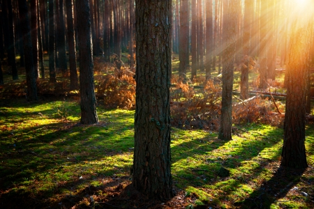 Photo for Misty Old Forest  Autumn Woods  - Royalty Free Image