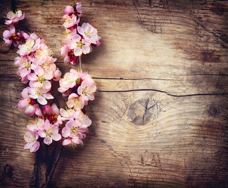 Spring Blossom over wooden table