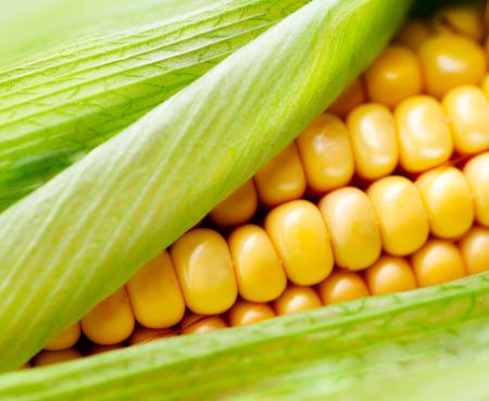 Photo for Sweet corn closeup  Fresh organic corn cob - Royalty Free Image