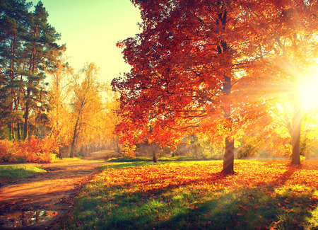 Foto de Autumn scene. Fall. Trees and leaves in sun light - Imagen libre de derechos