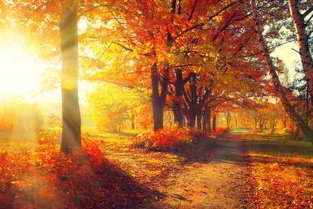 Foto de Fall. Autumn Park. Autumnal Trees and Leaves in sun rays - Imagen libre de derechos