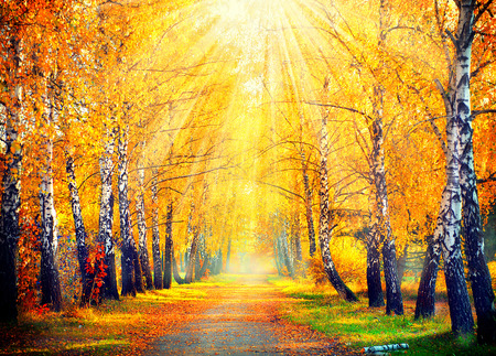 Autumnal Park. Autumn Trees and Leaves in sun rays mural