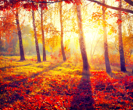 Photo pour Autumnal Park. Autumn Trees and Leaves in sun rays - image libre de droit