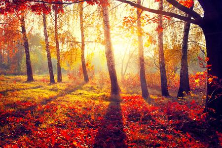 Photo pour Autumn. Fall. Autumnal trees in sun rays - image libre de droit