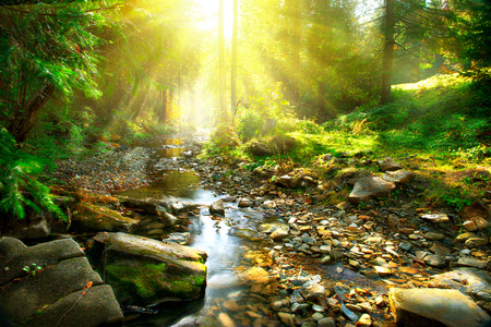 Foto de Mountain river. Tranquil scenery in the middle of green forest - Imagen libre de derechos
