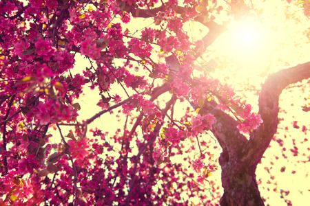 Photo for Spring nature background. Blooming tree over sunny sky - Royalty Free Image
