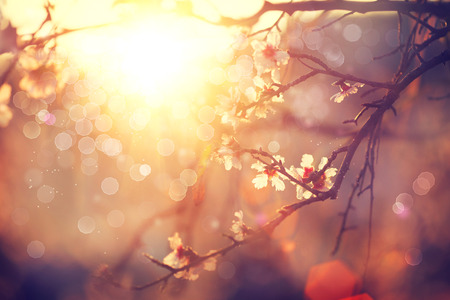 Foto de Spring blossom background. Beautiful scene with blooming tree - Imagen libre de derechos
