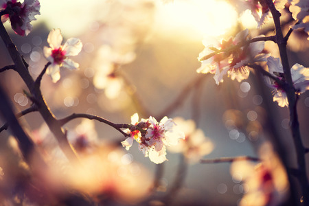 Foto de Beautiful nature scene with blooming tree and sun flare - Imagen libre de derechos