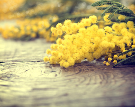 Foto de Mimosa spring flowers on the wooden table - Imagen libre de derechos