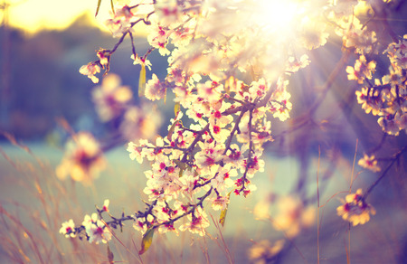 Photo pour Beautiful nature scene with blooming tree and sun flare - image libre de droit