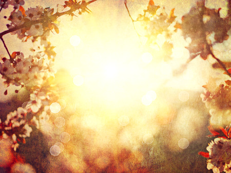 Photo for Spring blossom blurred background. Vintage styled, sepia toned - Royalty Free Image