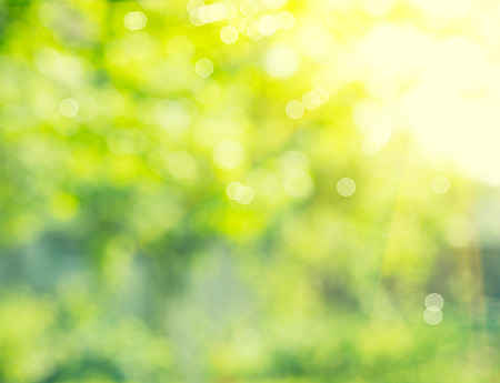 Photo pour Nature background. Abstract blurred summer green bokeh - image libre de droit