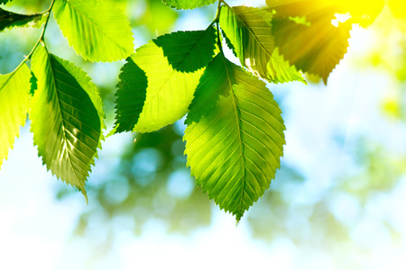Foto de Nature green leaves background. Abstract blurred bokeh - Imagen libre de derechos