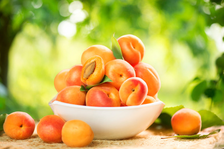 Photo for Apricot. Ripe organic apricots on a wooden table - Royalty Free Image