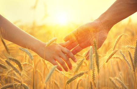 Foto de Couple taking hands and walking on golden wheat field over beautiful sunset - Imagen libre de derechos