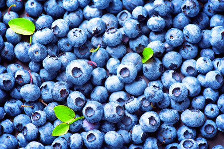 Photo for Blueberry background. Ripe and juicy fresh picked blueberries closeup - Royalty Free Image