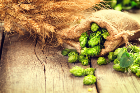 Foto de Hop in bag and wheat ears on wooden cracked old table. Beer brewery concept. Ingredient for brewing beer. Beauty fresh-picked hop cones and wheat closeup. Sack of hops and sheaf of wheat on vintage background. Retro style. Alternative medicine. Harvest co - Imagen libre de derechos