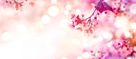 Photo pour Spring blossom border with pink blooming tree - image libre de droit