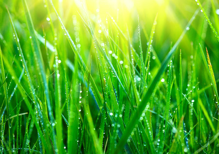 Photo pour Grass. Fresh green grass with dew drops closeup. Abstract nature background - image libre de droit