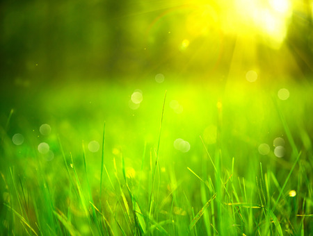 Photo pour Nature blurred background. Green grass in spring park with sun flares backdrop - image libre de droit