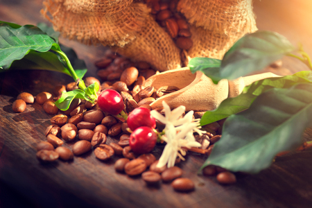 Photo pour Coffee beans, coffee flowers and leaves on wooden table - image libre de droit