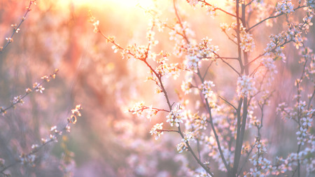 Photo for Spring blossom background. Beautiful nature scene with blooming tree and sun flare - Royalty Free Image