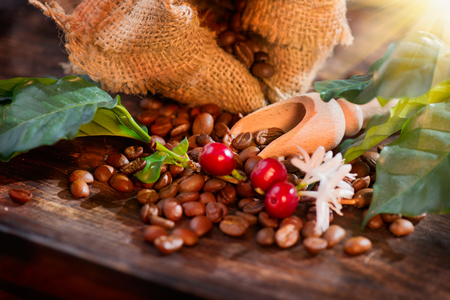 Foto de Coffee beans, flowers and berries on wooden table closeup - Imagen libre de derechos