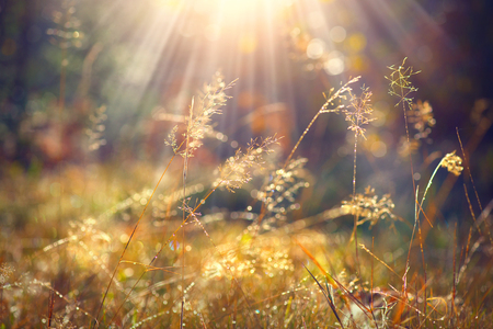 Photo for Beautiful nature background. Autumn grass with morning dew in sun light closeup - Royalty Free Image