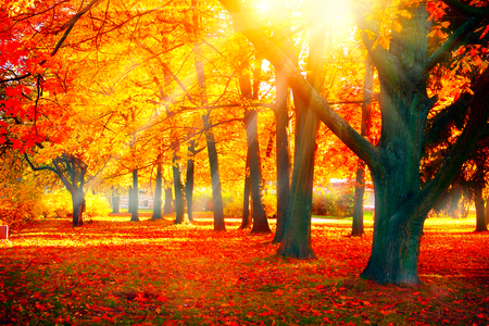 Photo pour Autumn. Fall nature scene. Beautiful autumnal park - image libre de droit