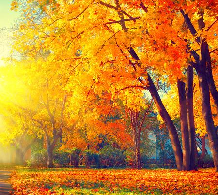 Photo pour Autumn. Fall nature scene. Beautiful autumnal park - image libre de droit