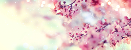 Photo pour Spring border or background art with pink blossom. Beautiful nature scene with blooming tree and sun flare - image libre de droit